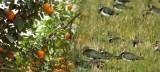 proyectos-sostenibles-sector-agrarios