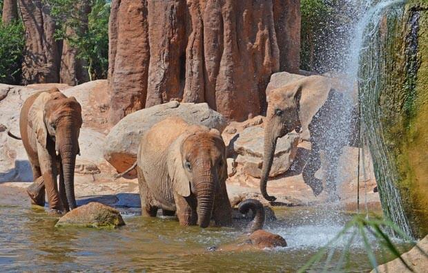 Bioparc Valencia - elefantes en el lago - verano 2013