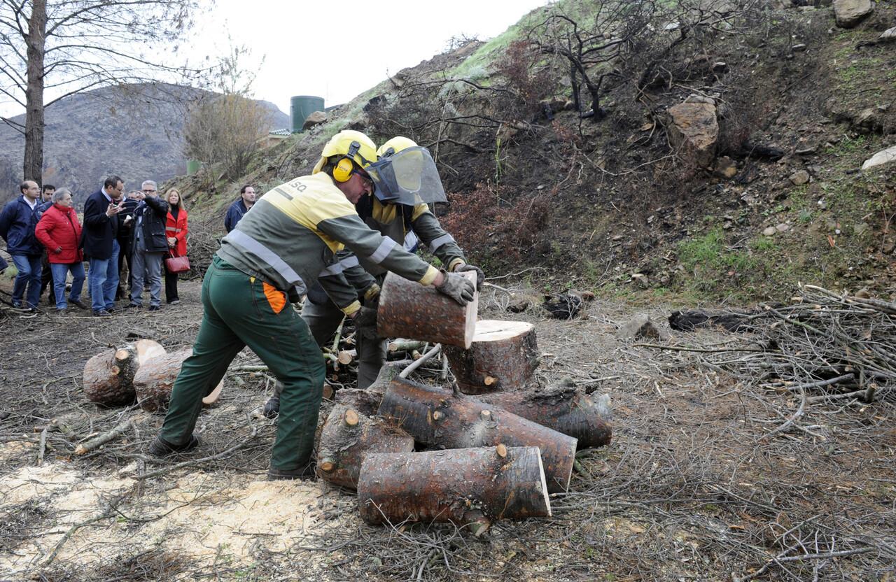 Brigadas forestales foto_Abulaila