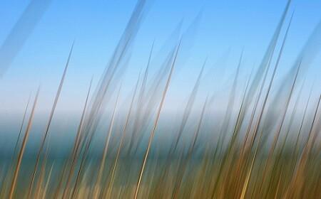Foto- 1er. Premio 2012. El Saler de Vicente Alemany