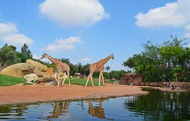La sabana africana de Bioparc Valencia - 2013
