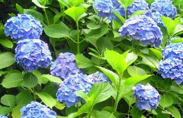 cuidar-plantas-verano