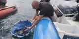 Suelta de cuatro ejemplares de raya en el mar