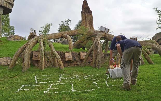 Bioparc Valencia - Cuidadores preparando el recinto de gorilas - Primer cumple de Ebo