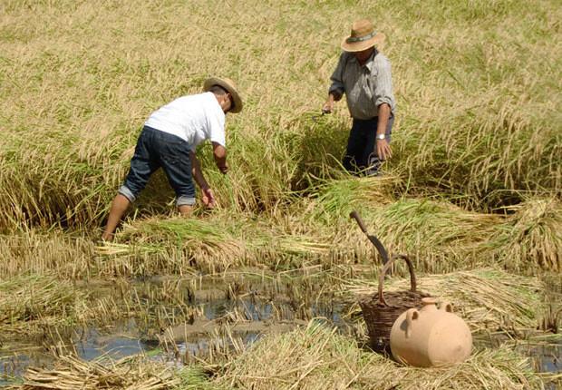 Foto: arrozdevalencia.org
