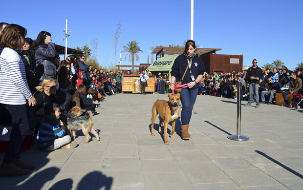 3er desfile solidario de perros en Bioparc Valencia - 15 diciembre 2013
