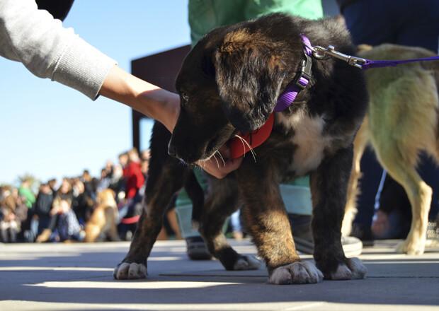 3er desfile solidario de perros en Bioparc Valencia - perrito negro
