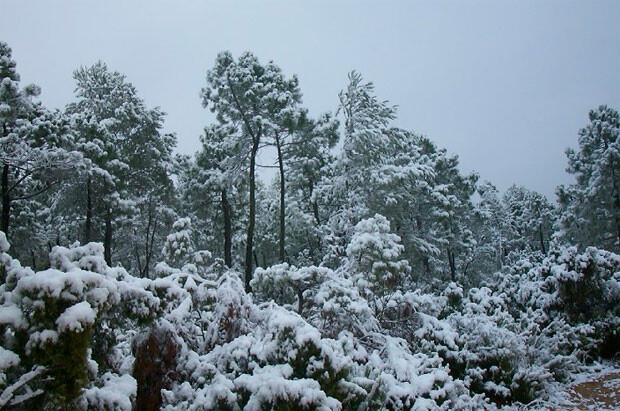 nevada-fin-de-semana