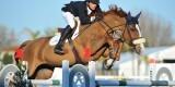 at CSI2* Mediterranean Equestrian Tour I at Oliva Nova Equestrian Center, Oliva - SPAIN