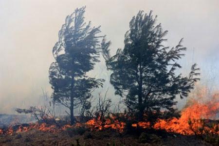 incendio-forestal
