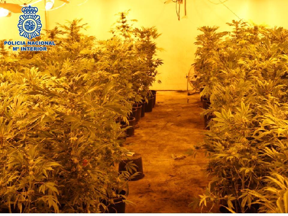 300_plantas_marihuana