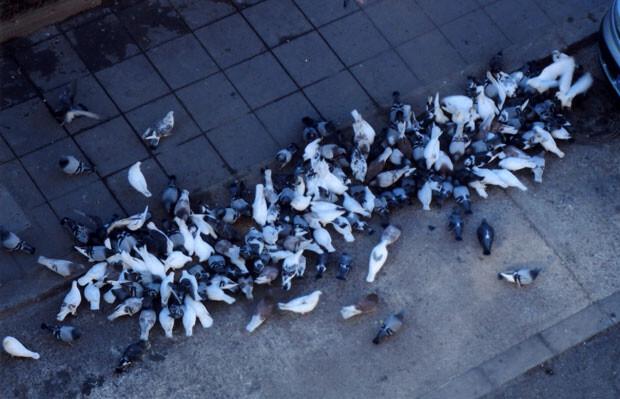 palomas-en-el-cabanyal
