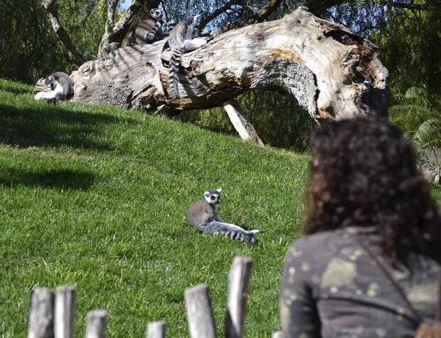 Cara a cara con los animales salvajes - wild animals face to face - Bioparc Valencia 2014