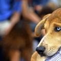 4 desfile solidario de perros abandonados - TATTOO