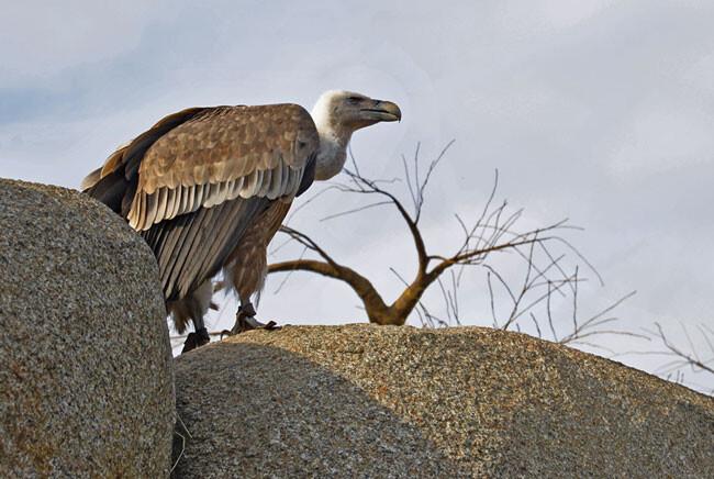 Día-Mundial-Aves-Migratorias
