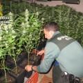 foto marihuana 2