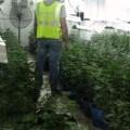 La Guardia Civil desarticula un laboratorio de  marihuana camuflado en una nave industrial  de Sueca (Valencia)