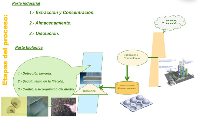 Microsoft PowerPoint - CO2FORMARE_Etapas