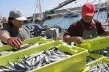PescaIFotoMinisterio
