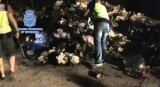 La Policía Nacional se incauta en Murcia de más de 11 kilos de heroína procedentes de Holanda