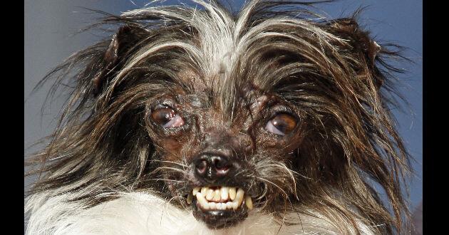 perro-feo-1930401