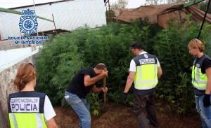 Foto marihuana Sevilla 1