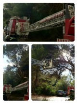 @bomberosvlc realizando poda preventiva en zonas de paso del  saler
