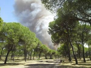 Incendio Cartaya 3_tcm7-341674_noticia