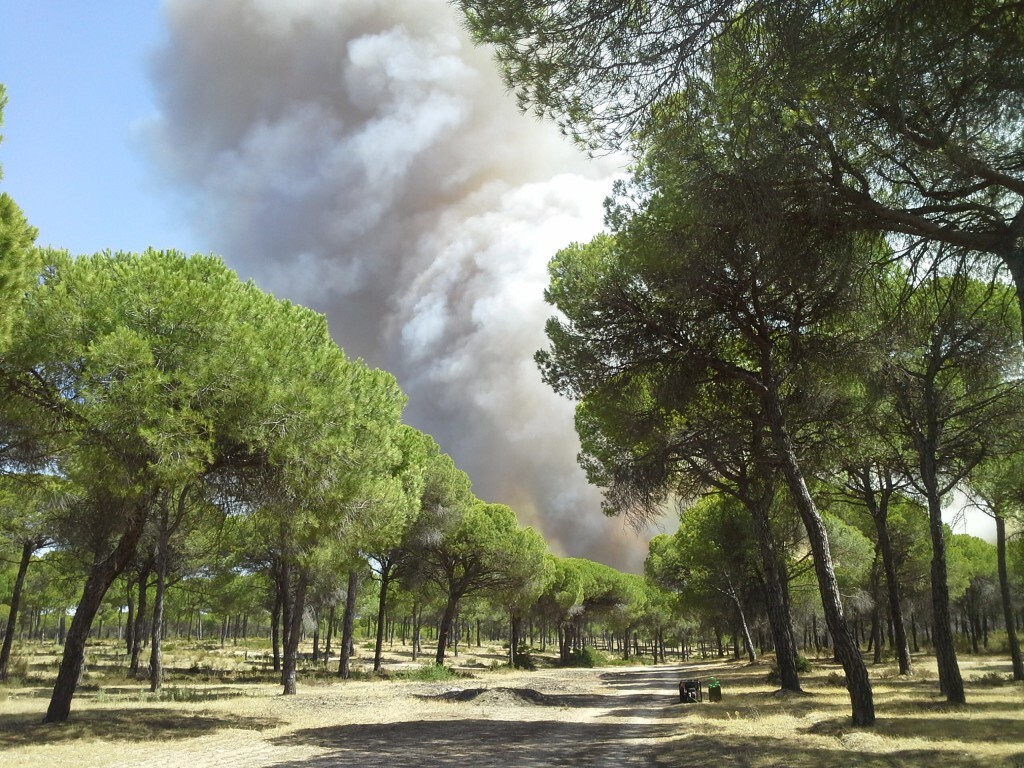 Incendio Cartaya 3_tcm7-341674_noticia