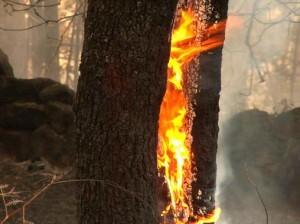 La efectividad de los medios de extinción de fuegos es menor en condiciones de alta temperatura. / Elenti