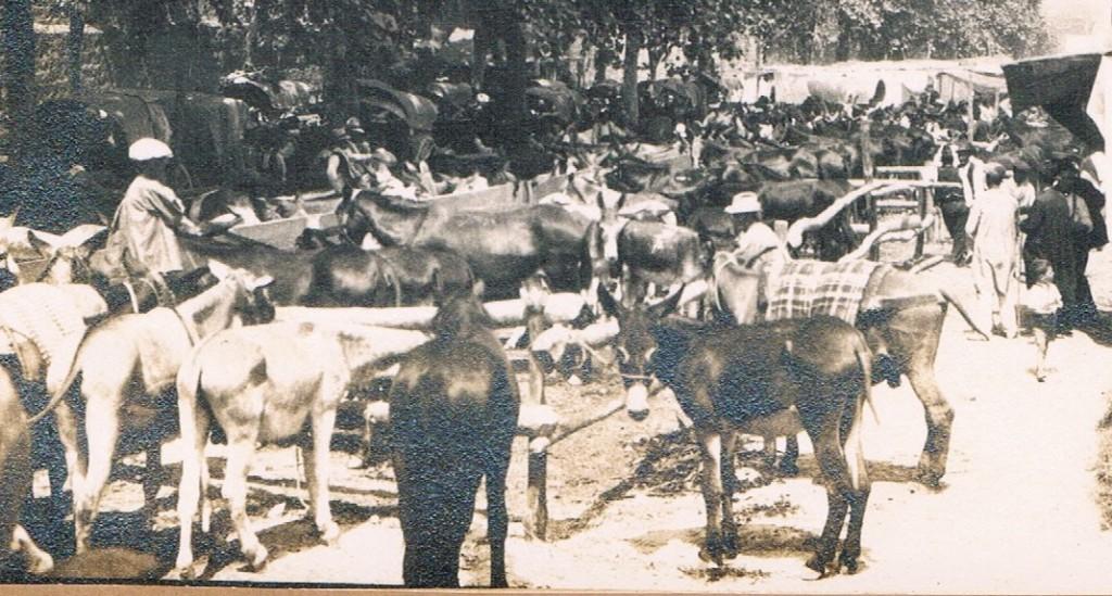 Mercado de caballerías.  Ca. 1900