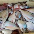Pesca C Burriana 1 14
