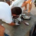 Pesca C Burriana 1 14 3