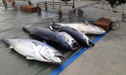 Pesca CN Oropesa 15VIII14 (4)