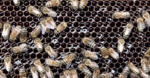 abejas-1939618