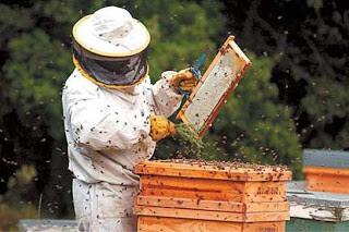 apicultor (INT)