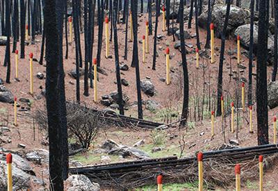 Informe Incendios Forestales 2010 © WWF