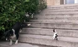 Vídeo: Perro sale huyendo con el maullido de un gato