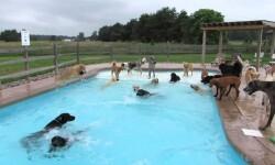 Vídeo: Perros hacen fiesta de piscina