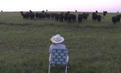 Vídeo: Un pastor usa un trombón para atraer al ganado