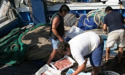 Actividad pesquera-sardina
