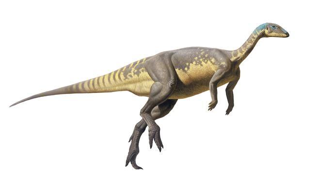 Reconstrucción de Eousdryosaurus, por Raúl Martín. / UNED