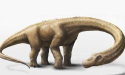 Descubierto-el-dinosaurio-terrestre-mas-pesado-del-mundo_image_380
