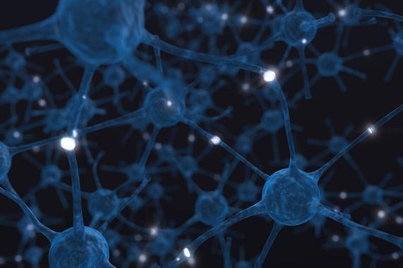 Las redes neuronales se conectan siguiendo una topología que maximiza la estabilidad, un ejemplo para las redes creadas por el hombre. / Birth Into Being