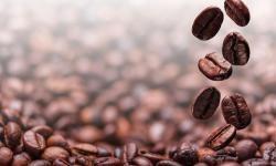 En comparación con otras especies de plantas, incluidas la uva y el tomate, el café alberga grandes familias de genes que se relacionan con la producción de compuestos alcaloides y flavonoides, los cuales contribuyen a aspectos como el aroma del café y su amargura. / Fotolia.