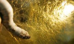 Larva de gusano de seda elaborando el capullo como paso previo al periodo de metamorfosis. / Salvador D. Aznar Cervantes