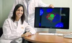Los investigadores del CNIO Bruno Sainz e Irene Miranda muestran la imagen de una célula madre tumoral que contiene vesículas fluorescentes en color verde. / CNIO