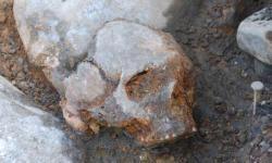 Cráneo de mujer del yacimiento de Kanaljorden en Motala (Suecia), excavado entre 2009 y 2013. / Fredrik Hallgren.