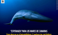 Blue whale, California