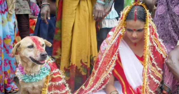 La boda entre una joven hindú y un perro (Fotos: Barcroft)